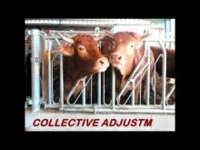 Embedded thumbnail for Jourdain - Number 1 in tubular steel equipment for cattle raising